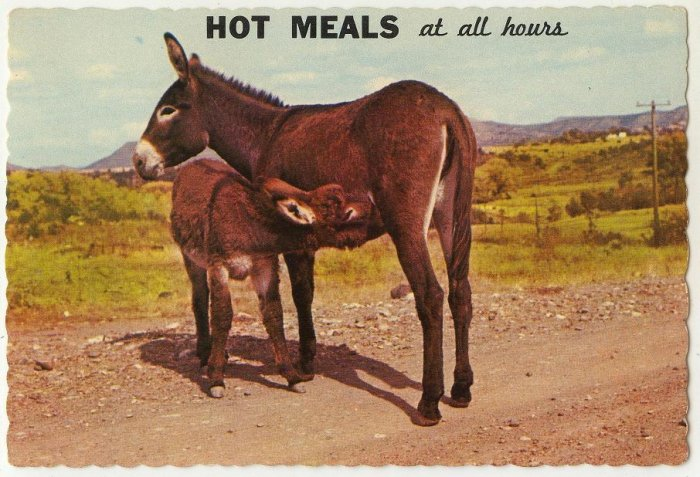 Vintage 1968 Donkey Hot Meals at All Hours Dexter Press Petley Studios