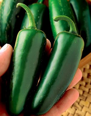 Hot Pepper Large Jalapeño Capsicum annuum - 30 Seeds