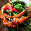 Largest Hot Pepper Cow Horn Chile Chili - 20 Seeds