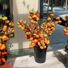 Pumpkin Tree Pumpkin On A Stick - Solanum integrifolium - 20 Seeds