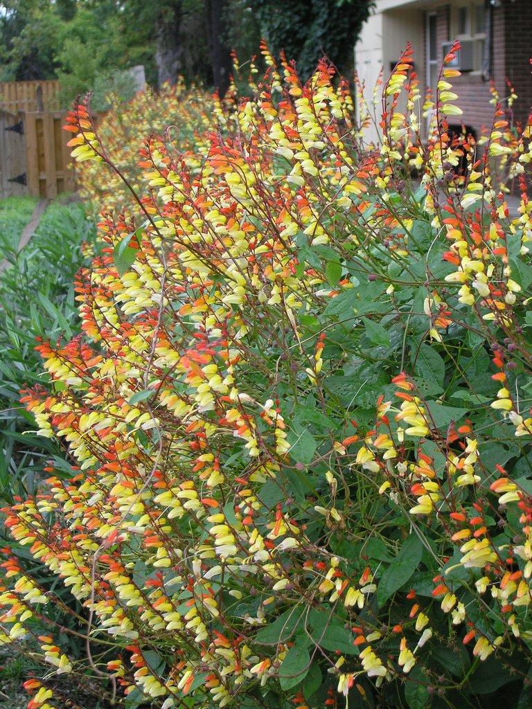 Suggerimento piante da esterno forum acquariofilia facile allestimento e gestione - Piante tropicali da esterno ...
