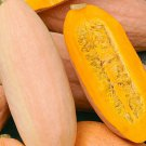 Giant Winter Banana Squash Pink Mammoth Jumbo - 15 Seeds