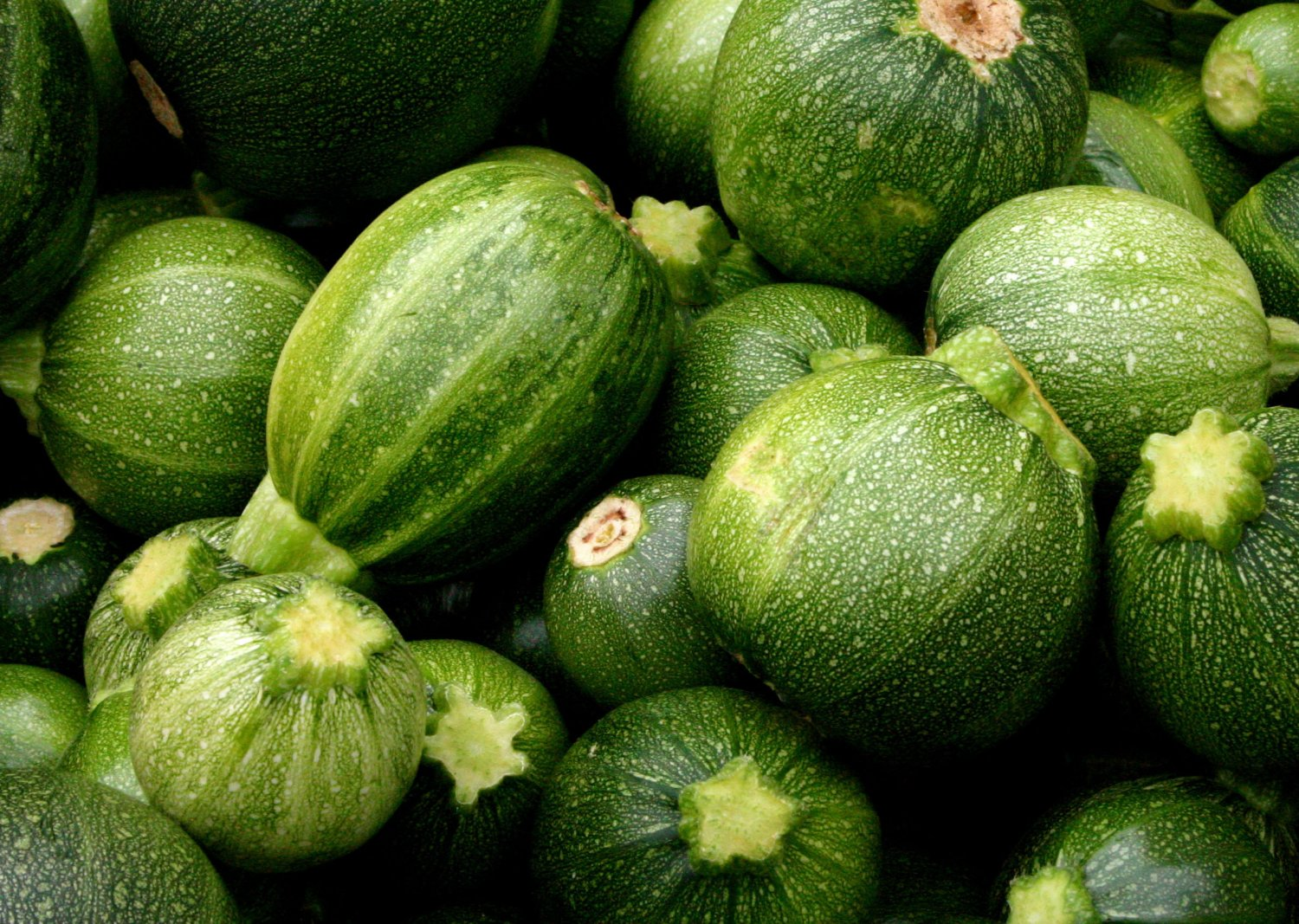 french round gourmet ball zucchini summer squash ronde de nice 30 seeds. Black Bedroom Furniture Sets. Home Design Ideas