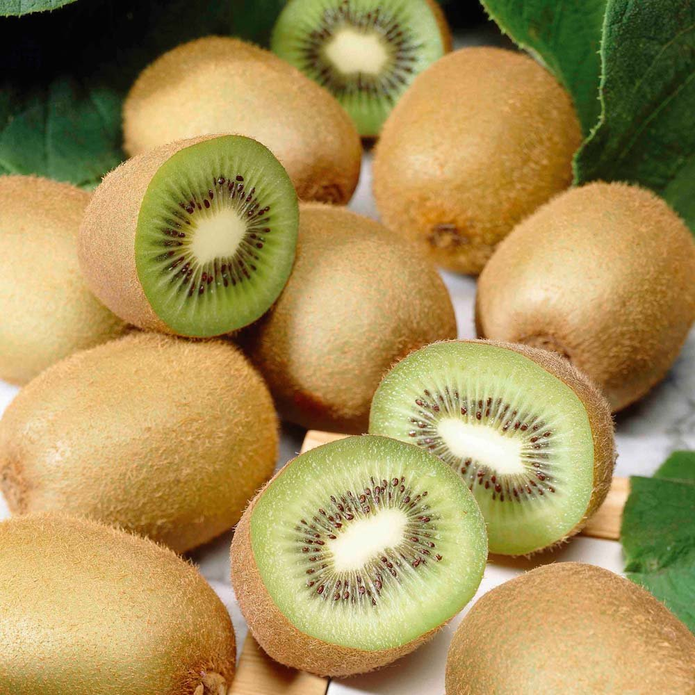 kiwi fruit yang tao actinidia deliciosa 35 seeds. Black Bedroom Furniture Sets. Home Design Ideas