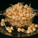 Garbanzo Bean Chickpea Cicer arietinum - 80 Seeds