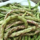 Organic Heirloom Rattlesnake Snap Bean Phaseolus vulgaris - 80 Seeds