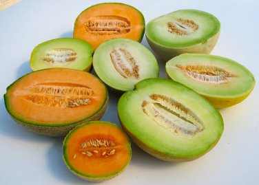 Sale! Mixed Up Melon Seeds - 100 Seeds
