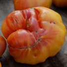 Rare Organic Heirloom Tomato 'Old German' Lycopersicon esculentum - 20 Seeds