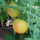 Organic Heirloom Tomato 'Wapsipinicon Peach' Lycopersicon lycopersicum - 20 Seeds