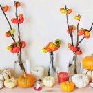 "Rare Ornamental ""Pumpkin On A Stick"" Solanum aethiopicum - 20 Seeds"