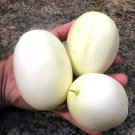 Rare Heirloom Unique Dragon's Egg Cucumber Cucumis Sativis - 10 Seeds