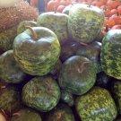 Heirloom Large Apple Gourd Lagenaria siceraria - 8 Seeds