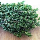 Organic Heirloom Kitchen Herb Thyme Thymus vulgaris - 200 Seeds