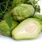 Organic Chayote Pear Squash Mirliton Sechium edule - 2 Fruits Seeds