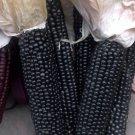 Organic Heirloom Sweet Corn Black Aztec Zea mays - 50 Seeds