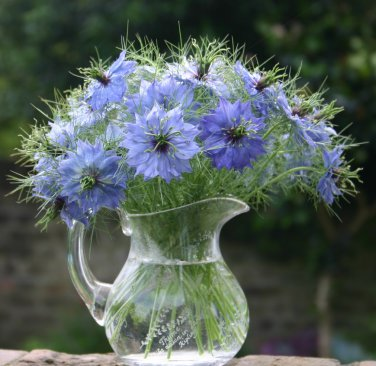 Nigella Persian Jewels Love in a Mist Nigella damascena - 100 Seeds