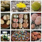 Pebble Plant Mix Cactus Lithops Succulents Living Stones - 20 Seeds