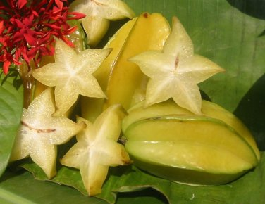 Exotic Carambola Star Fruit Averrhoa carambola - 8 Seeds