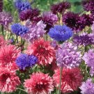 Edible Flowers Organic Cornflower Mix Centaurea cyanus - 100 Seeds