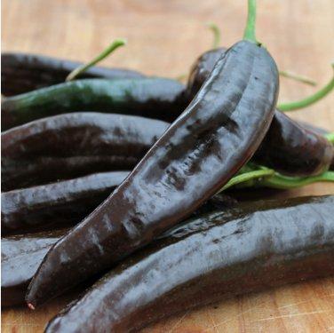 Chilaca Pepper Pasilla Bajio Chili Capsicum annuum - 20 Seeds