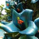 Rare Terrestrial Chilean Sapphire Tower Puya alpestris - 30 Seeds