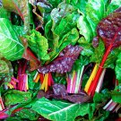 Organic Heirloom Leaf Beet Swiss Chard Rainbow Beta vulgaris - 200 Seeds