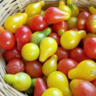 Organic Heirloom Pear Tomato Lycopersicon lycopersicum - 25 Seeds
