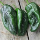 Organic Heirloom Ancho Poblano Peppers Capsicum annuum - 20 Seeds