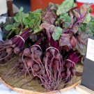Unique Organic OP Miniature Beet Beta vulgaris - 50 Seeds