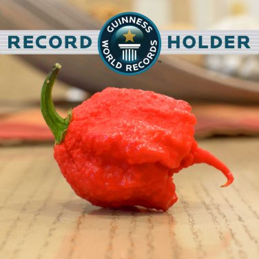 HOT! Carolina Reaper Worlds Hottest Chili Pepper Capsicum chinense � 10 Seeds