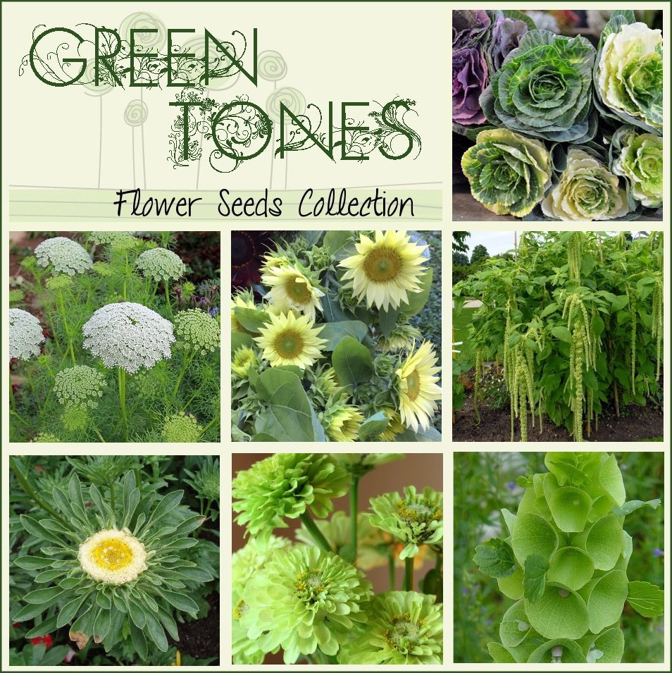 Unusual Green Tones Flower Seed Collection 7 Varieties