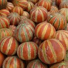 Rare Indian Kajari Delhi Melon Cucumis melo - 20 Seeds