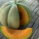 Canadian Cool Weather Heirloom Oka Melon Cucumis Melo - 20 Seeds