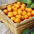 Uchuva Fruit Organic Giant Poha Berry Physalis Peruviana - 50 Seeds