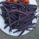 Heirloom Dark Bush Bean 'Royal Burgundy' Phaseolus vulgaris - 50 Seeds