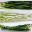 Organic Kitchen Herb Asian Garlic Chives Chinese Leek Allium Tuberosum - 300 Seeds
