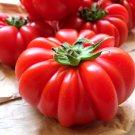 Organic Italian Pomodoro Costoluto Genovese Tomato Heirloom Lycopersicon lycopersicum - 20 Seeds