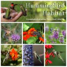Hummingbird Habitat Flower Seed Collection - 6 Varieties