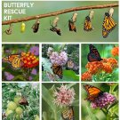 Butterfly Rescue Kit Milkweed Seed Gift - 6 Varieties