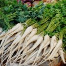 Old World Parsley Root Vegetable Petroselinum crispum tuberosum - 100 Seeds
