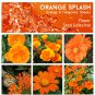 Orange Splash & Tangerine Shades Flower Seed Collection - 6 Varieties