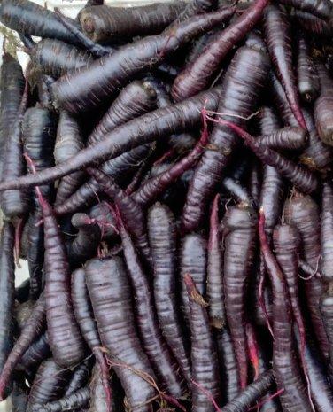 "Rare Organic German Heirloom 'Black' Carrot ""Alter Pfälzer"" Daucus Carota - 50 Seeds"