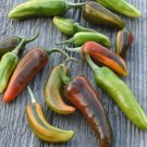 Rare Heirloom Variegated Fish Pepper Capsicum annuum - 10 Seeds