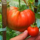 "Rare Heirloom Tomato ""Giant Delicious"" Solanum lycopersicum  - 15 Seeds"