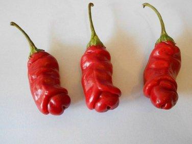 Hot! Organic Chili Willy Chili Capsicum annuum - 10 Seeds