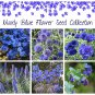 Moody Blue All Blue Flower Seed Gift Collection - 6 Varieties