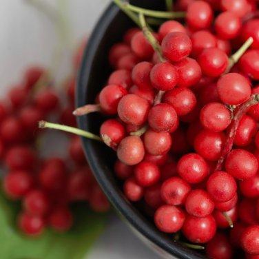 Wu Wei Zi Five-Flavor-Fruit Fructus schizandrae - 10 Seeds