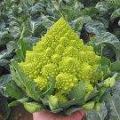 Heirloom Gourmet Romanesco Broccoli Brassica oleracea - 50 Seeds