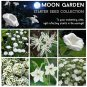 Moon Garden Starter White Flower Seed Collection 6 Varieties