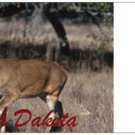 North Dakota Buck - 5 notecards